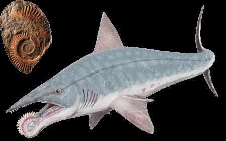 Акула Хеликоприон