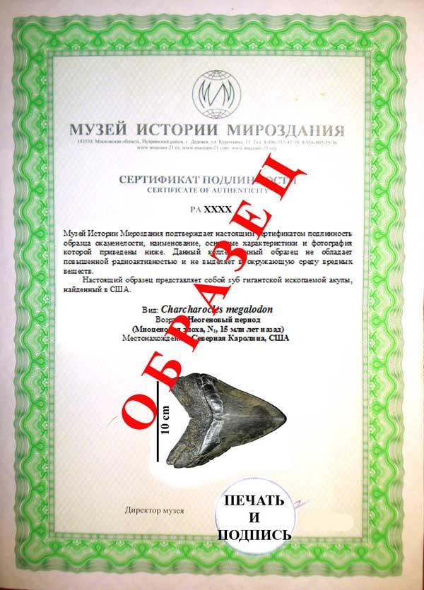 Сертификат подлинности окаменелостей