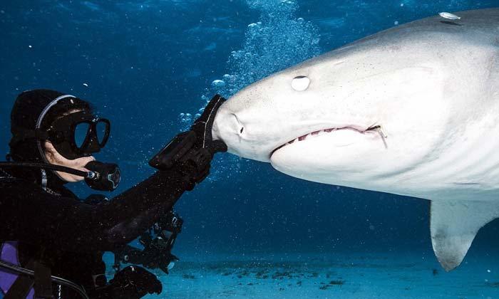 Страх нападения акулы